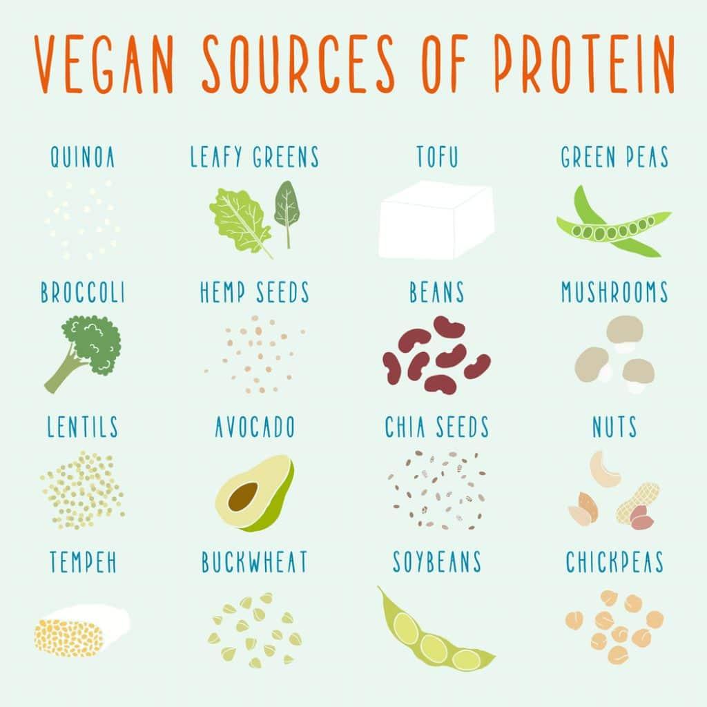 Plantebaseret kost protein